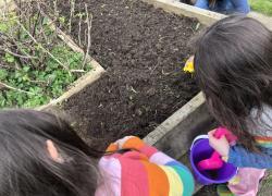 Veg Bed - Spring